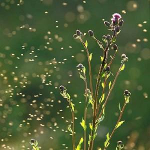 pollen-allergy-proof-400x400